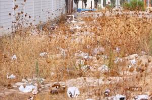 Entre el campo del Independiente y el Palma Arena hay un nido de basura